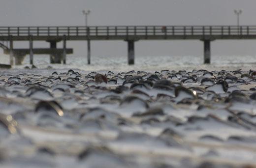 Ostsee Fischland Krimi Corinna Kastner Wustrow Darß Zingst Mecklenburg-Vorpommern Stralsund