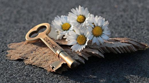 Vier Gänseblümchen mit einem goldenen Schlüssel auf einer Baumrinde