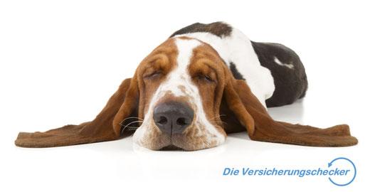 Hunde-OP-Versicherung Hundekrankenversicherung Tierhalterhaftpflichtversicherung
