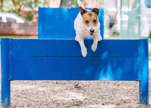 Erstattungssatz Hundeversicherung