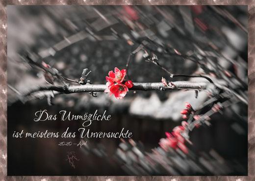Zierquitten Blüte