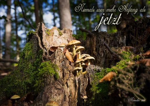 Pilze aus Baumstumpf