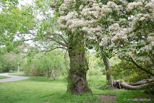 ブルックリン植物園 Brooklyn Botanic Garden