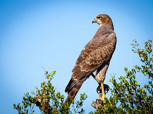 Ein Vogel strahlt Selbstvertrauen aus.