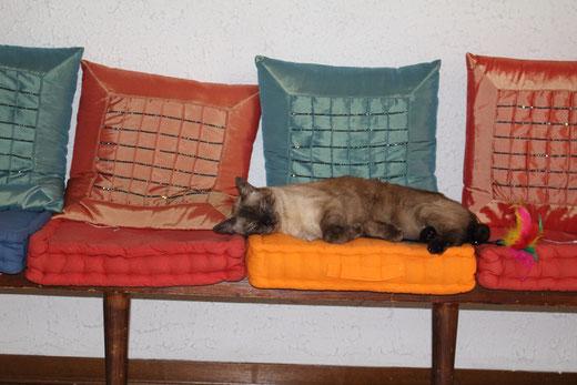 La gatta Aisha