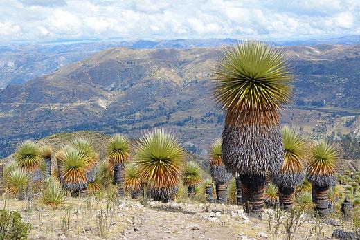 Reisespezialist für authentische Peru Reisen