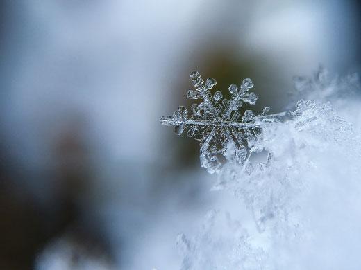 Schneeflocke, Winter, Immunsystem, Erkältung