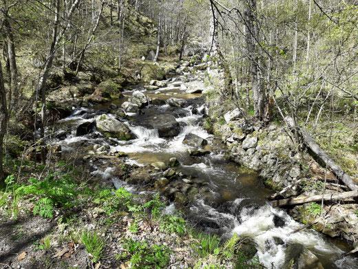Ruta botànica del bosc de Fonpedrosa