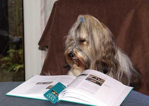 Wenn Tibis lesen ...