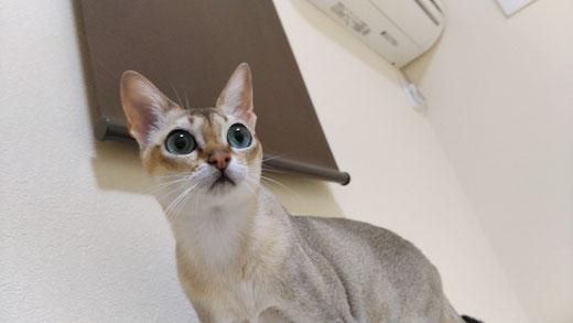 マットレス クリーニング 横浜 オシッコ 猫