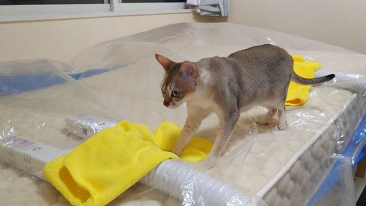 マットレスクリーニング 猫オシッコ 横浜