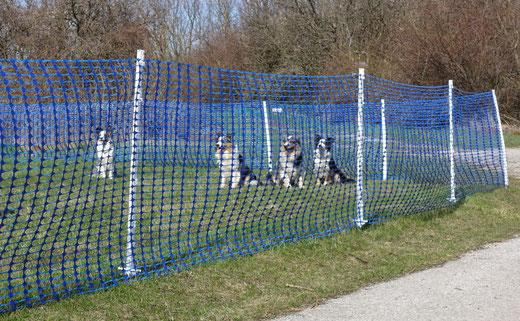 Bild: Callieway Hundezaun / Bauzaun / Abgrenzung bei Veranstaltungen / Wildzaun / Hühnerzaun
