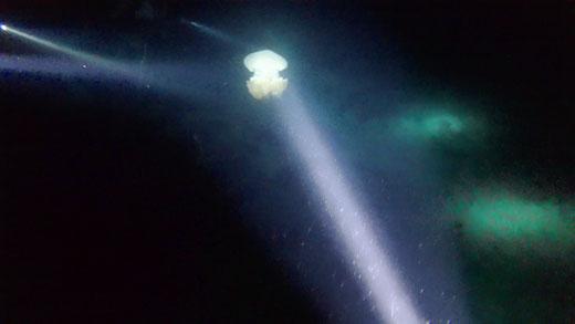 Das Highlight meiner Tauchgänge: eine große Qualle!