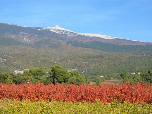 loucardalines-gite-rando-ventoux -automne