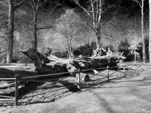 Hier sieht man das Bild von einem toten Baum