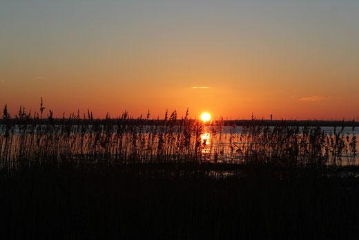 Sonnenuntergang an der Elbe  (Bitte anklicken)