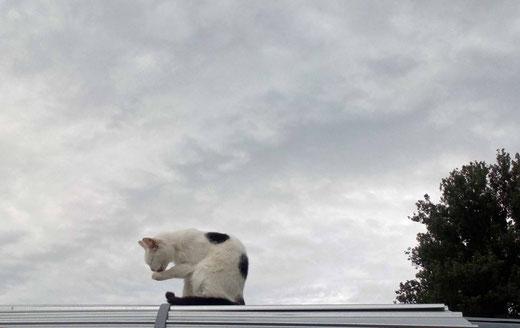 Die Paula auf dem kalten Blechdach ;-)