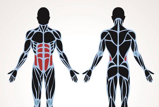 Rückenschmerzen Rumpfkraft Bauchmuskeln Sixpack Core Rüdiger Bülow Training is personal