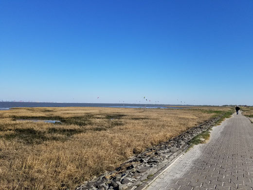 Bunte Schirme der Kite-Surfer am blauen Himmel von Fedderwardersiel