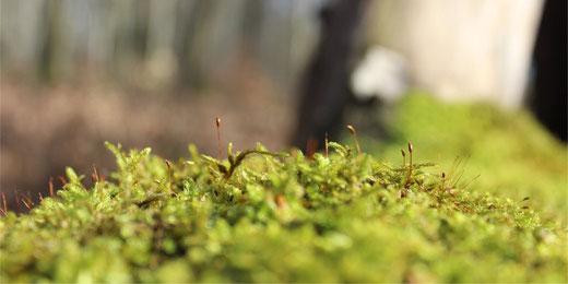 Der Tägernauer Wald bleibt. (Symbolbild)