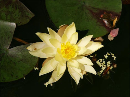 Ab 8. Juni darf man sich wieder über die Wunder der Natur freuen. Bild: Botanischer Garten Grüningen