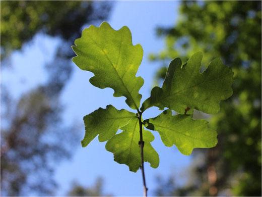 Der Cevi Gossau freut sich auf die Treffen in der Natur (Symbolbild)