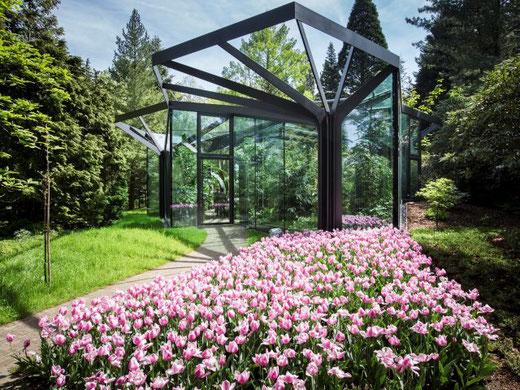 Ab dem 6. Juni wieder offen: der Botanische Garten Grüningen. Bild: Dominique Meienberg