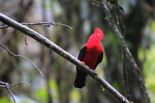 Manu Nationalpark entdecken mit PERUline