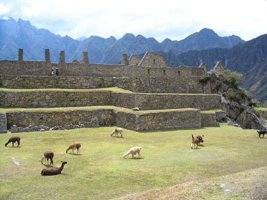 PERUline organisiert Ausflüge nach Machu Picchu