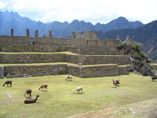 Machu Picchu erleben mit PERUline