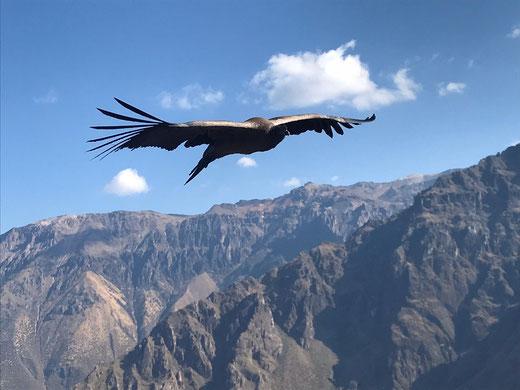 Am Cruz del Condor mit PERUline