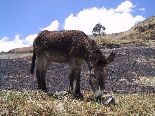 Mit dem Auto quer durch Peru