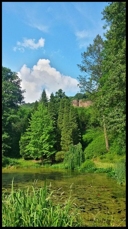 Im Waldpark Härle