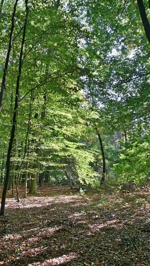 Das warme Licht der Herbstsonne leuchtet im Baerler Busch