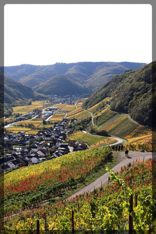"""Wanderer auf dem Rotweinwanderweg, Blick von der """"Schönsten Weinsicht 2016"""" über Dernau"""