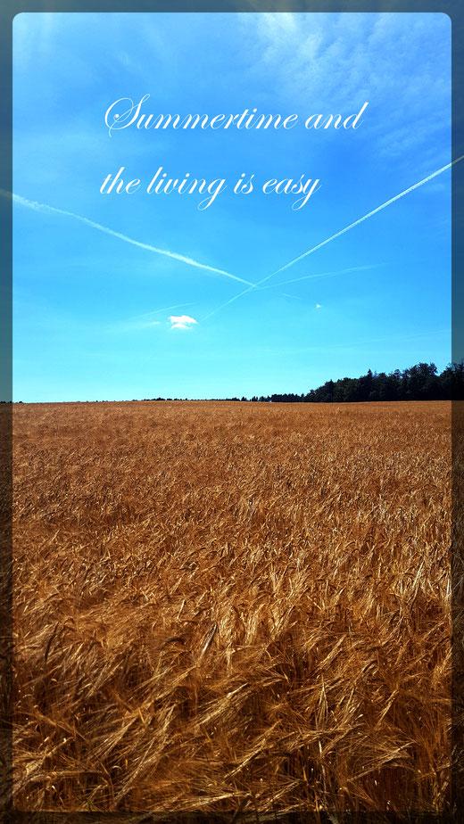 Durch weite Weizen und Roggenfelder führen sonnige Passagen
