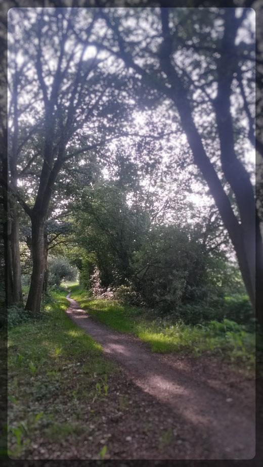Ausklang eines perfekten Tages, der Abendsonne entgegen auch auf solchen Wegen (Smartphoneaufnahme)