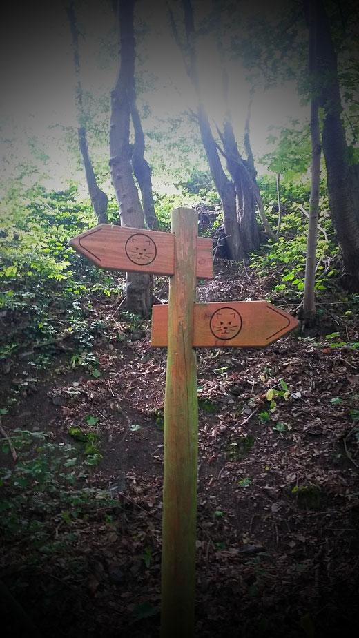 Der Wegweiser macht den gesamten Wildnis-Trail unverlaufbar.