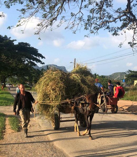 So sieht die Landwirtschaft auf Kuba aus.