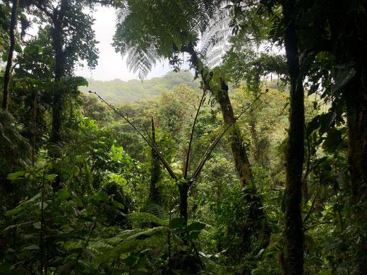 Ein Blick auf die natur von Santa Elena.