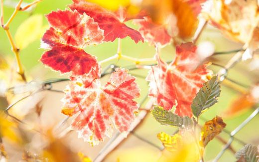 Herbst Leinenbild