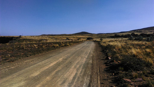 The road leading to the farm full of sheep grazing in the distance, South Africa. Mountains. Dirt. Bushes