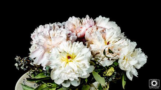 Photographe montauban  voici une présentation d'un timelapse de fleur , c'est un exemple de ce qu'il est possible de faire en présentation de produit.