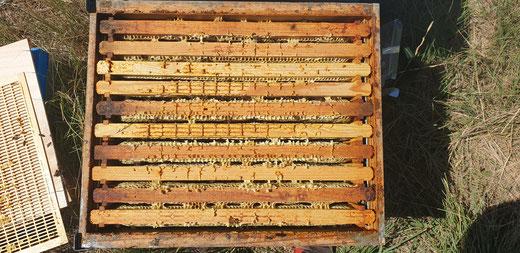 ruche pleine de miel en sortie de miellée de lavande