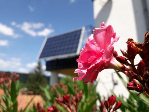 Leben mit der Energiewende TV - Oleander-Blüte vor Photovoltaik-Modul