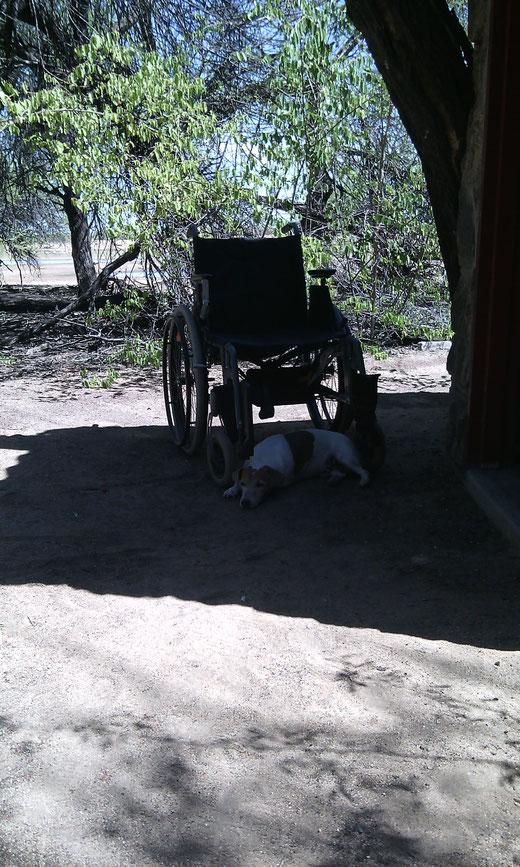 Hund liegt vor dem Rollstuhl im Schatten eines Baumes