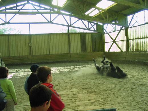 Les enfants observent les poneys en liberté, apprennent à comprendre leurs comportements et à communiquer avec eux.