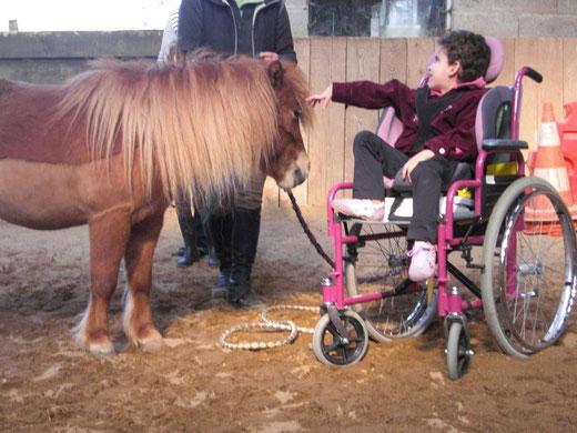 Les bénéfices de la thérapie avec le cheval auprès des personnes en situation de handicap : réaliser des prouesses pour toucher ou caresser le cheval.