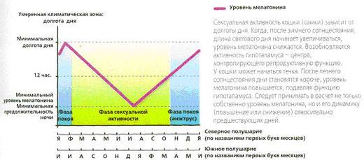 Рис.4. Уровень мелатонина у кошки