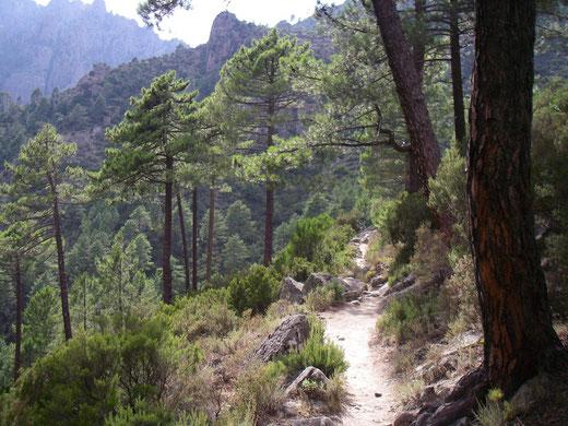 Korsika , Wanderung im Tal des Tavignano